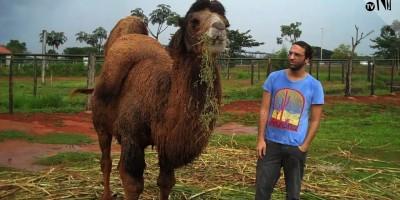 Entrevistamos o Camelo