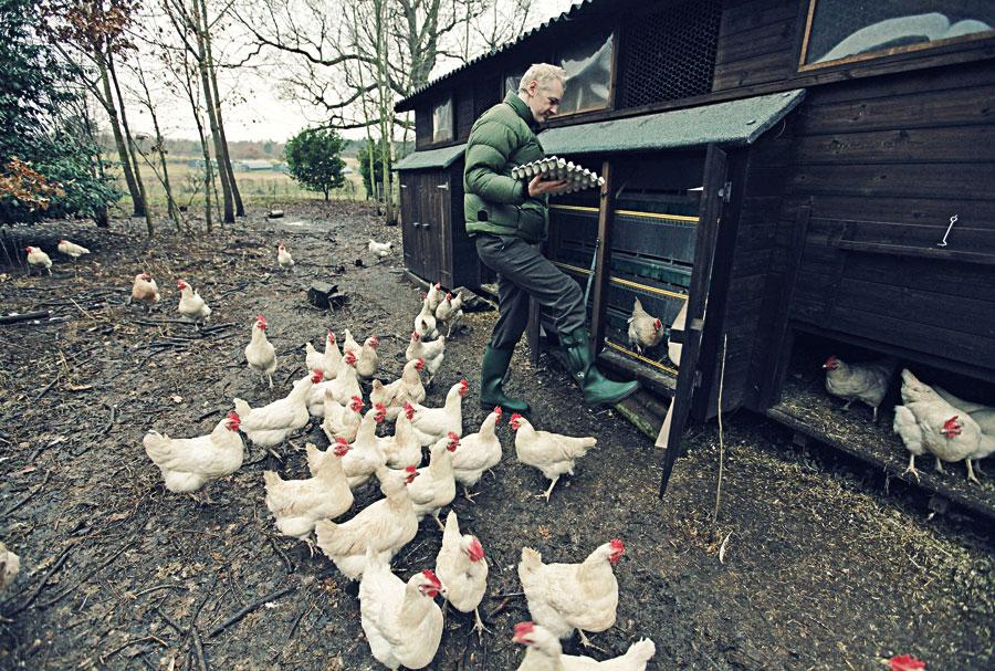 Assange pega no pesado no galinheiro de Ellingham Hall