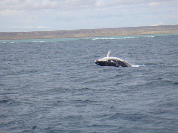 Baleias dançando no Oceno Índico