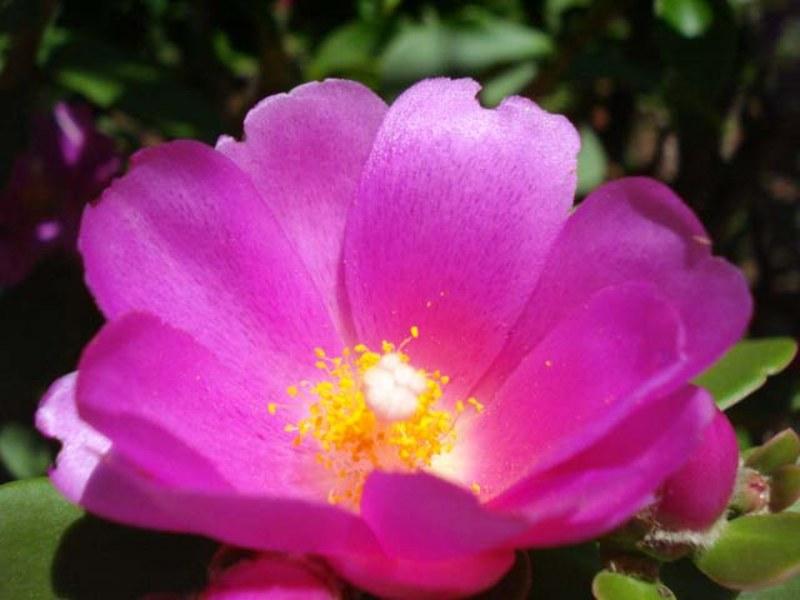 Flores da região