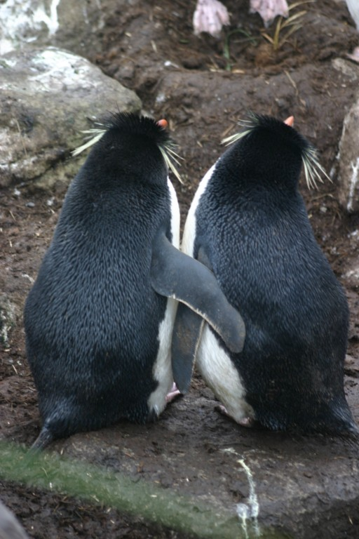 Amorzinho pinguim