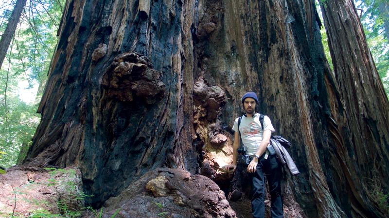 Bruno Torturra escorado em uma milenar sequoia