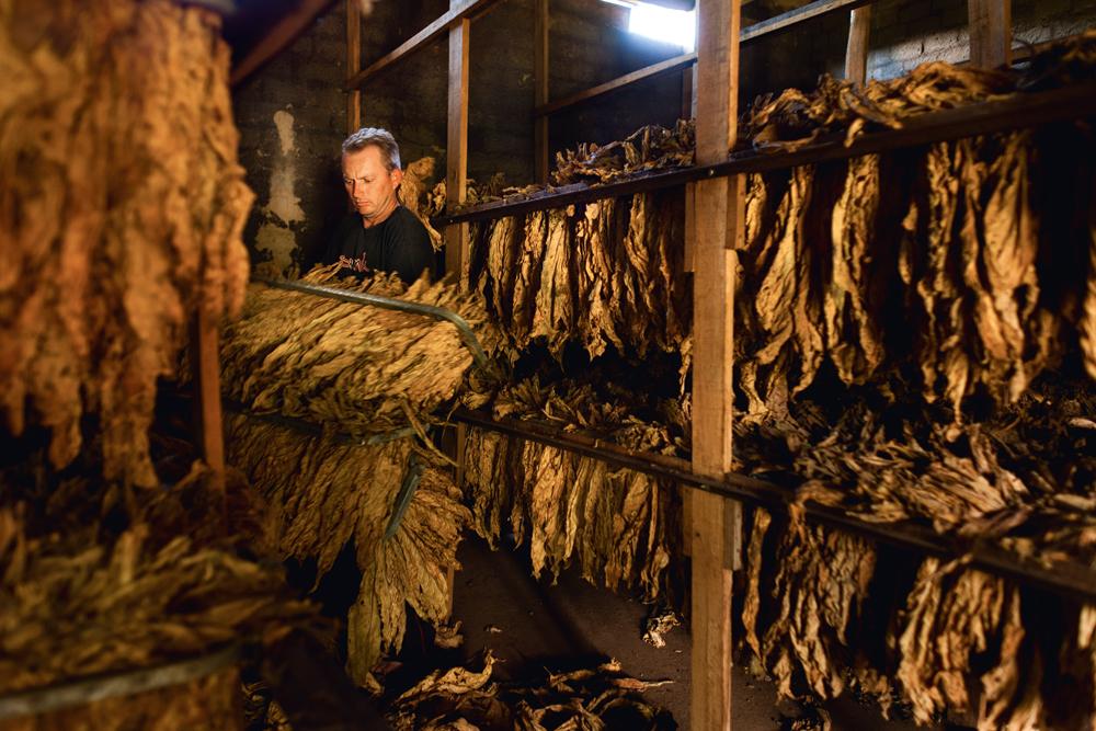 o interior de uma estufa de fumo