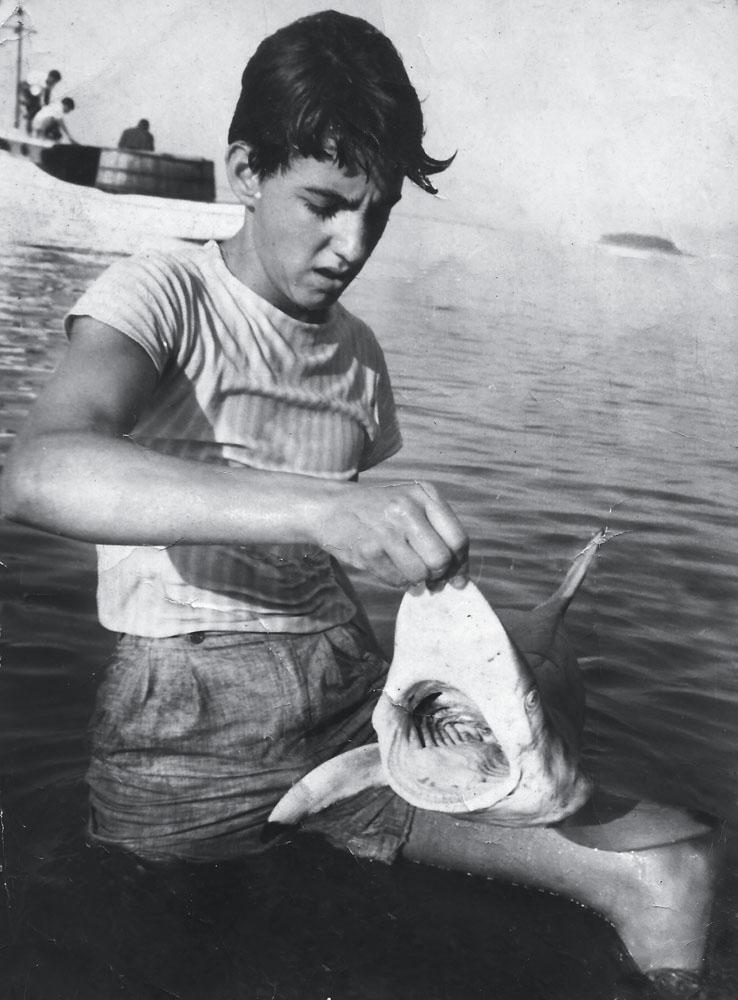 Bijupirá ainda adolescente, sem medo de tubarão