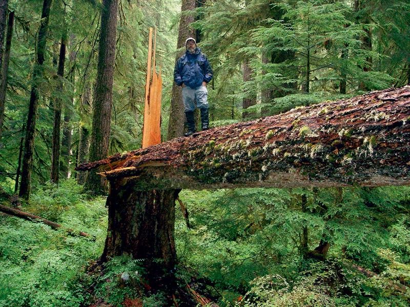 Stamets em seu santuário, as florestas ancestrais do estado de Washington