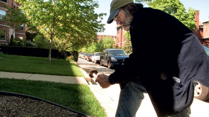 Em uma calçada em Chicago, descobre um Amanita venenoso em um canteiro