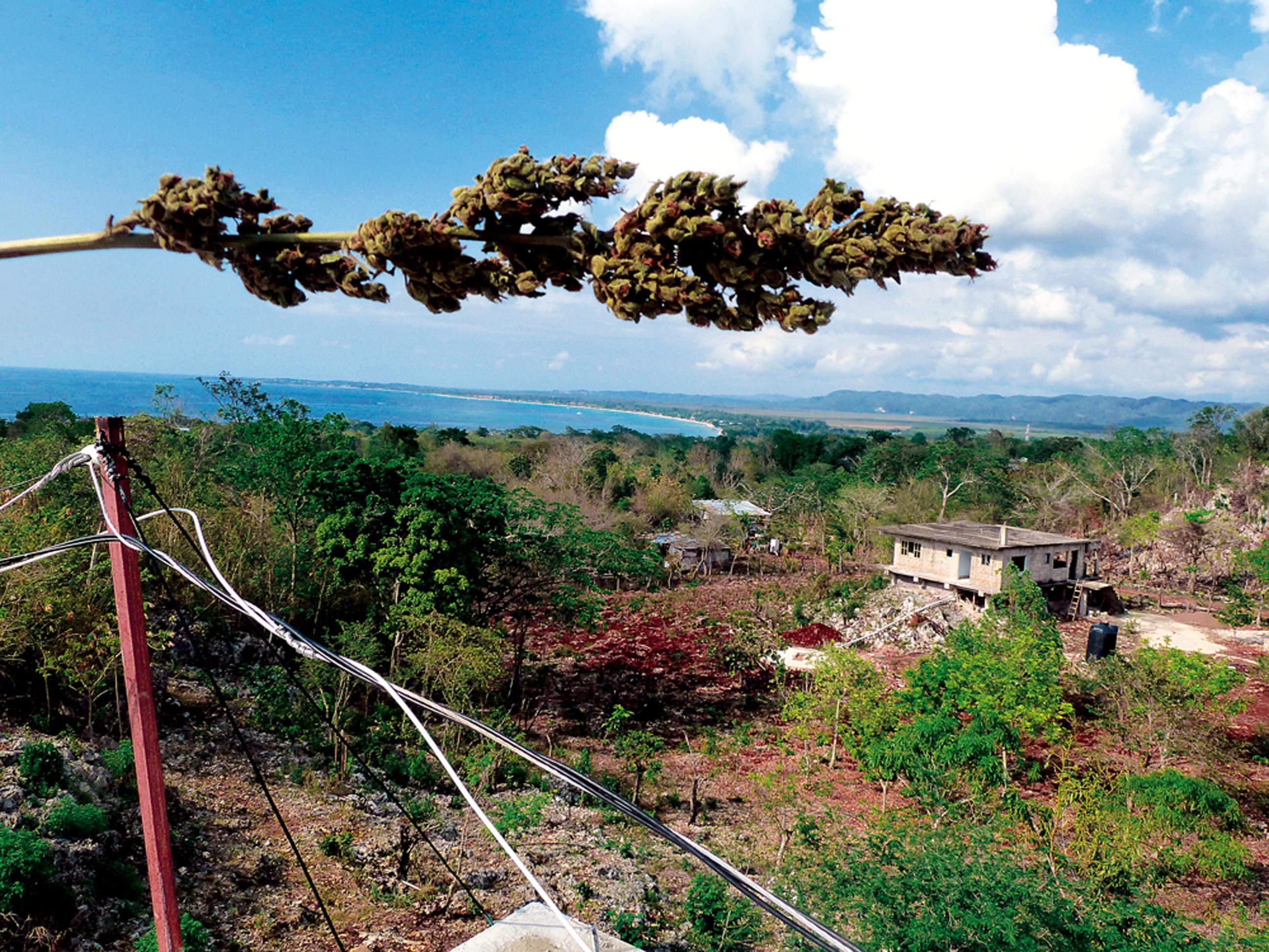 """NEGRIL: A praia mais bonita de West Moreland, na Jamaica, é conhecida por ficar na região onde cresce """"a mais forte e saborosa maconha jamaicana"""", nas palavras dos rastafáris da ilha. Apesar de não ser legalizado, o consumo de cannabis em todo o país é bastante tolerado"""