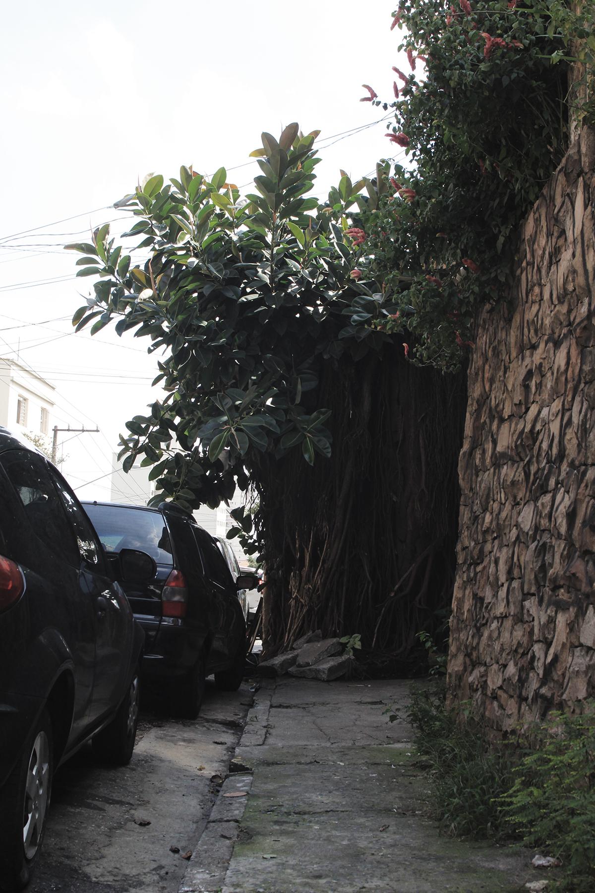 Rua Cajaiba, perto do nº 156, Perdizes: tinha pedras e raízes, e carros, e um muro, e não tinha uma calçada no fim do caminho
