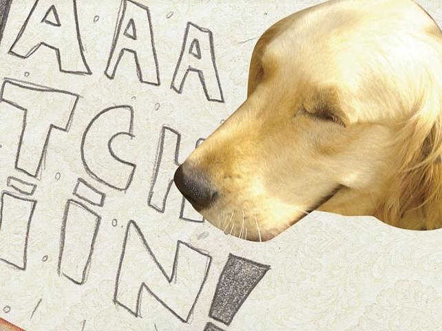 O elixir dos cães