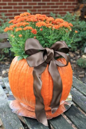 Dependendo do tamanho da abóbora, você pode colocar o vaso todo dentro dela ou plantar as flores