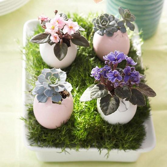 Cascas de ovos como suporte. Incrível!