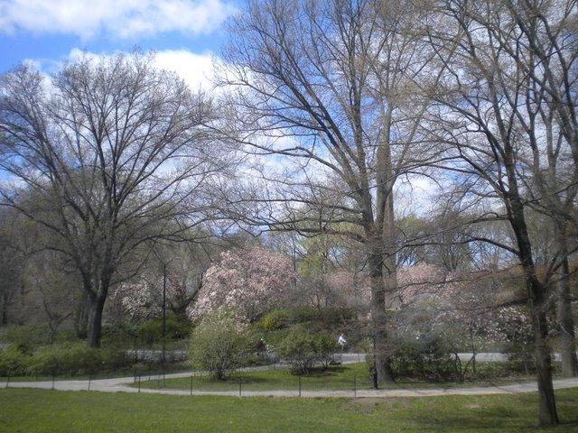 Central Park a tarde em dia de semana