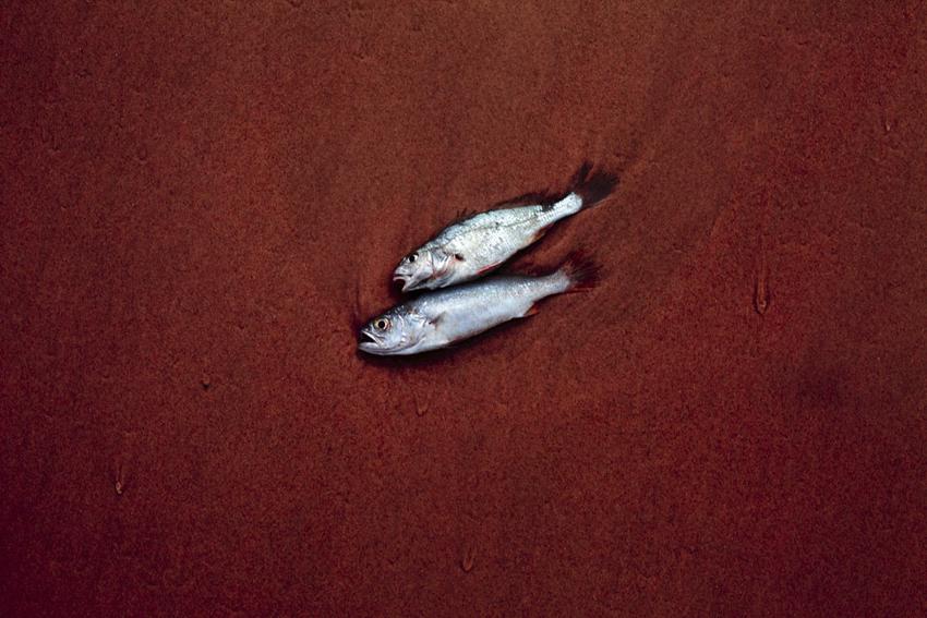 Galeria Experiência, Sin título. Da série Espejo, 2012