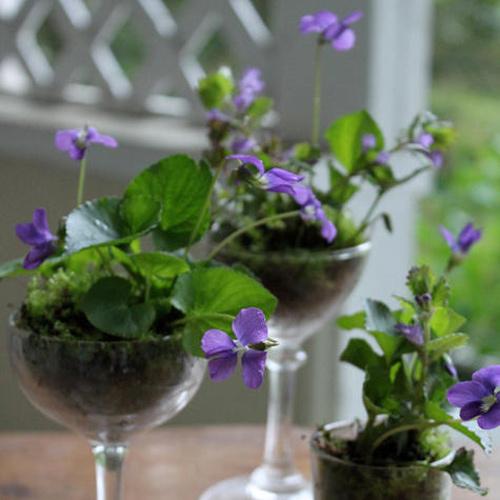 """Taças - No link """"taças viram vasos"""" você aprende como fazer"""