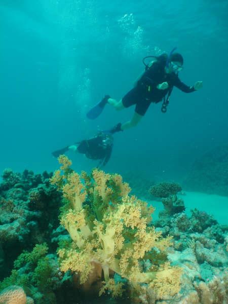 Mergulhando fundo
