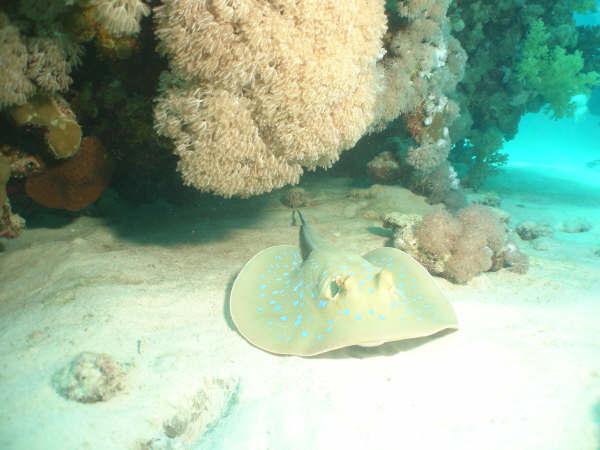 A fauna exótica do Mar Vermelho