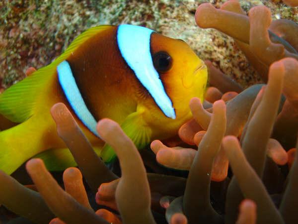 Achando o Nemo