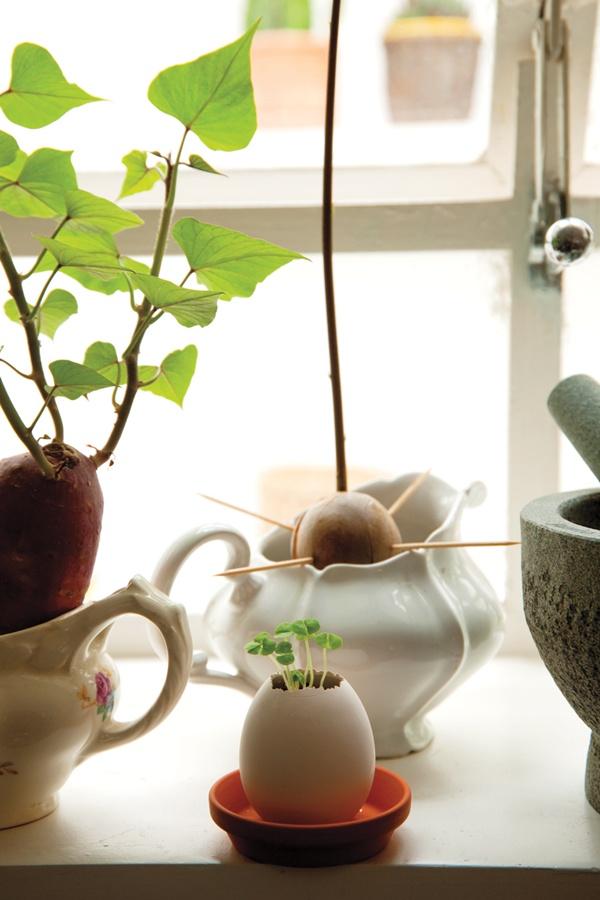 Sementes: Na janela da cozinha, ela planta batata-doce e abacate. Na casca de ovo, tem uma muda de manjericão, que seu namorado trouxe do Japão.