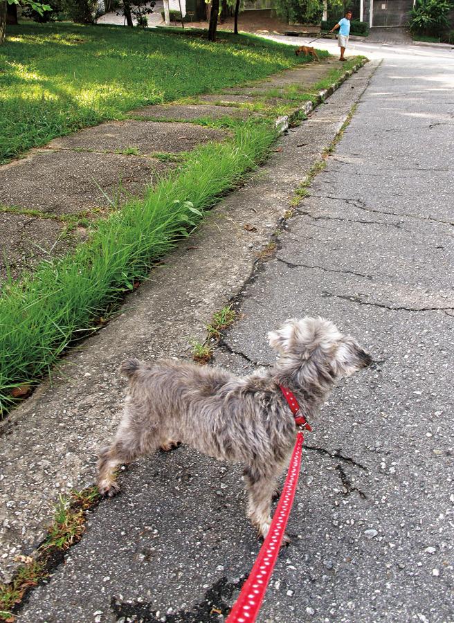 """8h30: """"Mais tarde vou passear com meu cachorro pelo bairro onde moro, a Vila Madalena"""""""