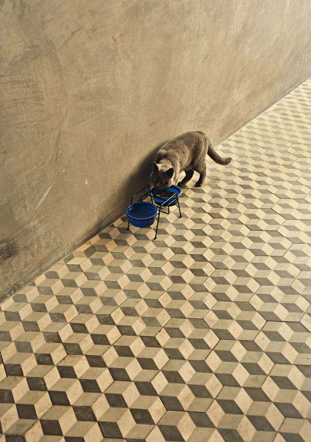 Gato de botas l O gato Jack, da raça English Shorthair, tem a idade da casa. Tatiana escolheu a raça por ser tranquila e caseira, não é um gato que gosta de sair para a gandaia