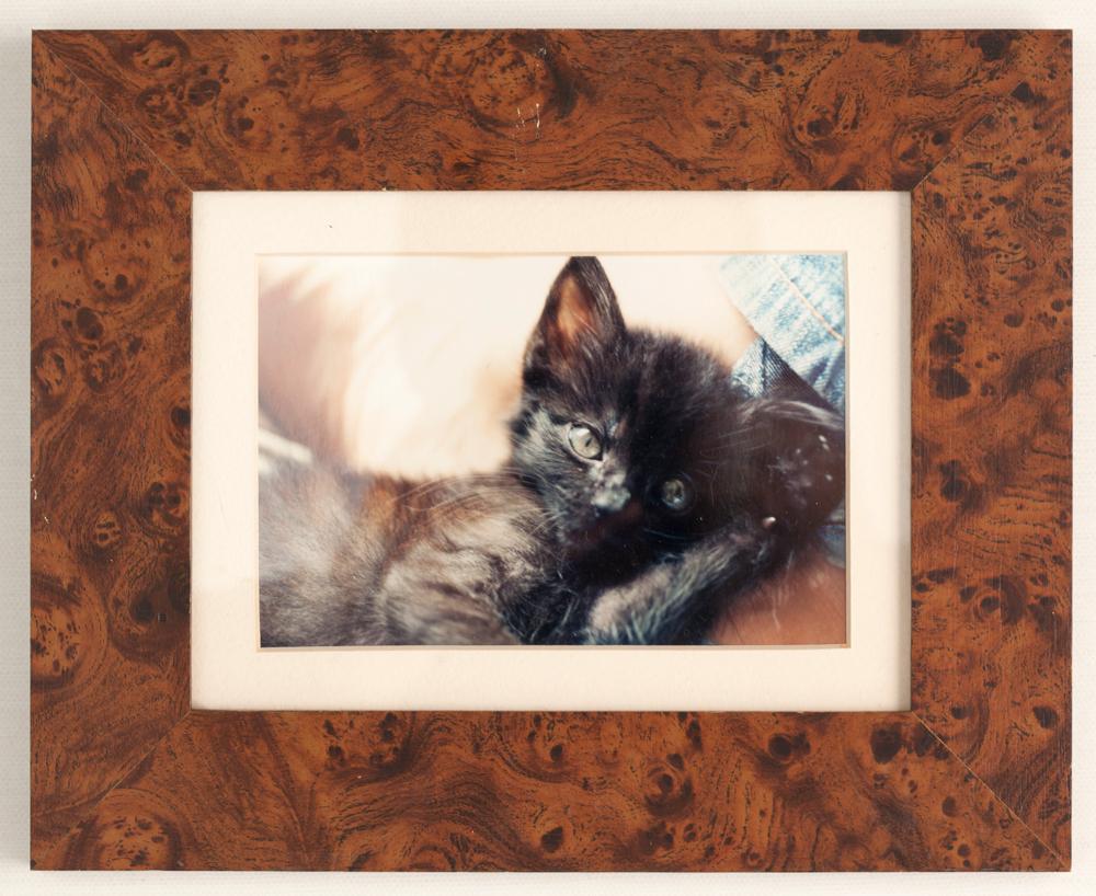 """3. Porta-retratos com foto da minha gata """"Ela chama Charlotte Sometimes, por causa da música do The Cure."""""""