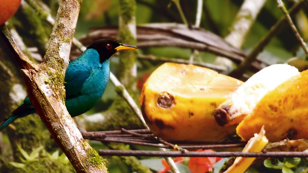 """""""O pássaro da foto é nativo de lá e, apesar de não ficar em gaiola, mora em nosso jardim."""""""