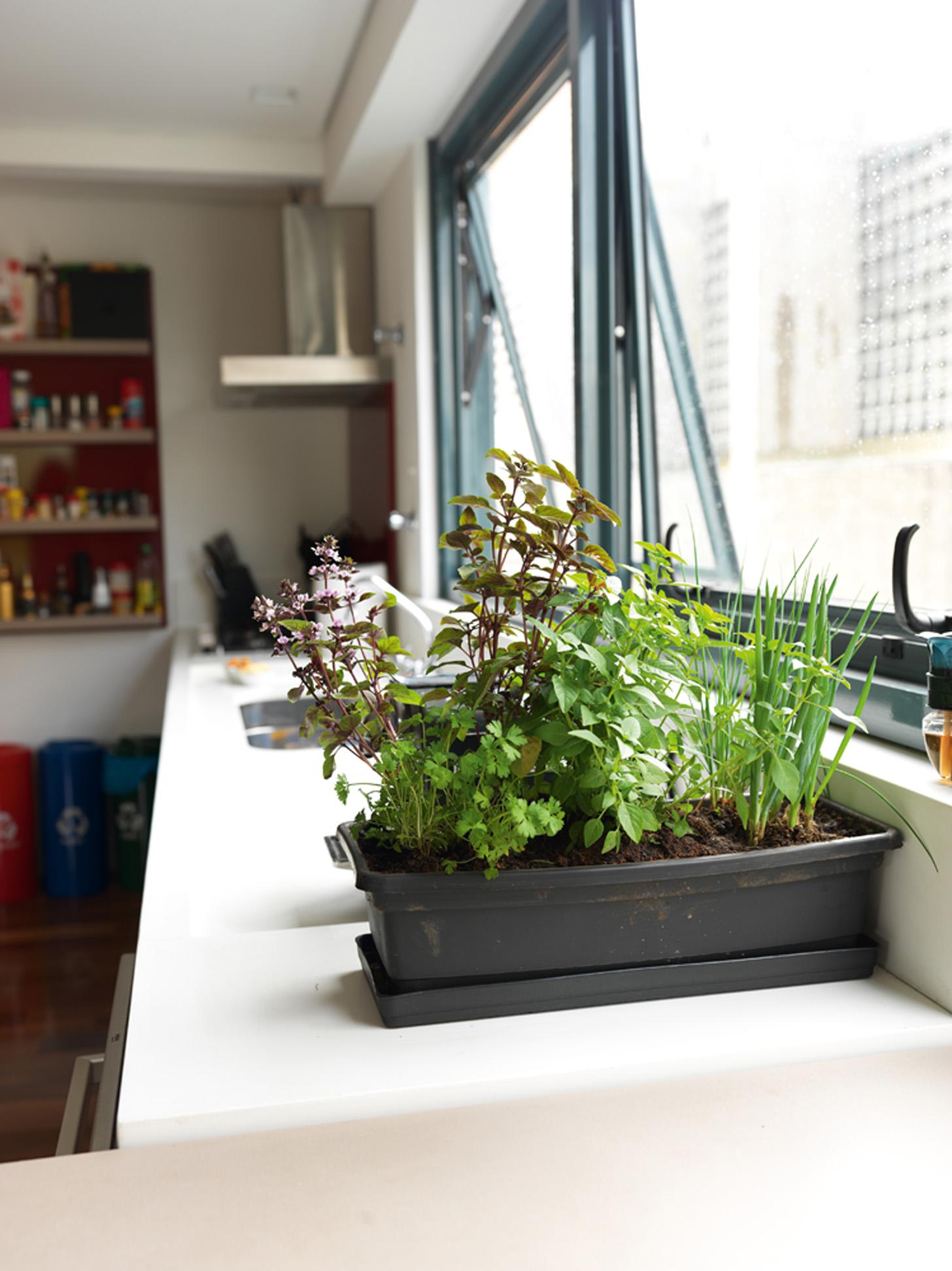 Horta caseira: Detalhe dos temperos que Camila planta em sua cozinha e que usa quase todos os dias. Ela está fazendo um curso de chef de cuisine