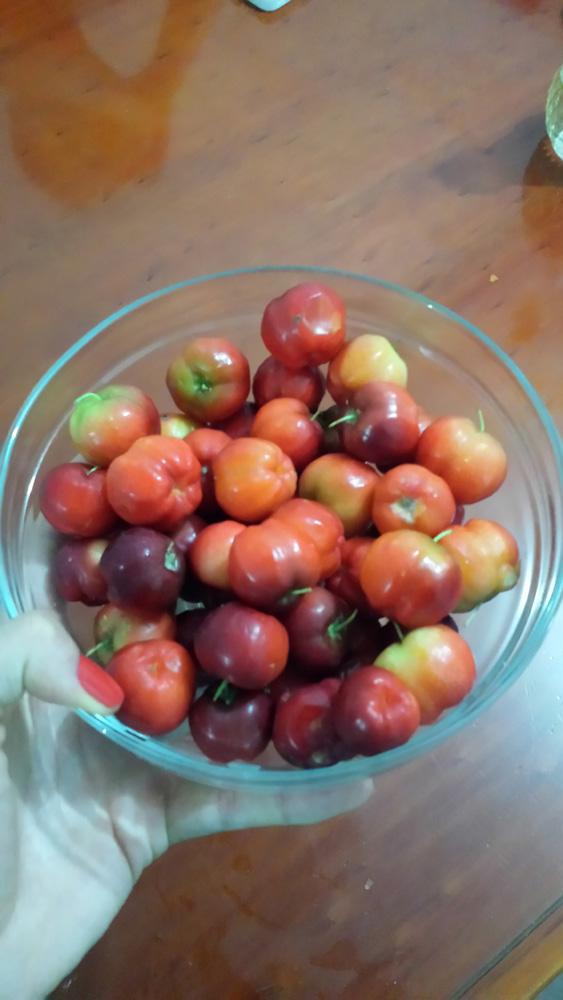"""08:20 """"Café da manhã com minha fruta preferida. Amo! #acerola."""""""