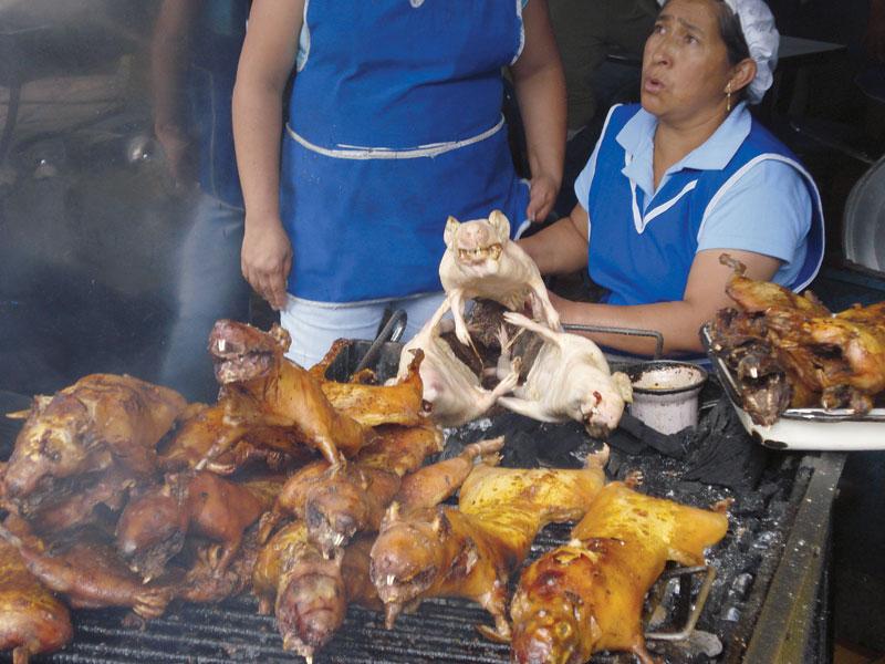 Porquinho-da-índia, especialidade do Equador