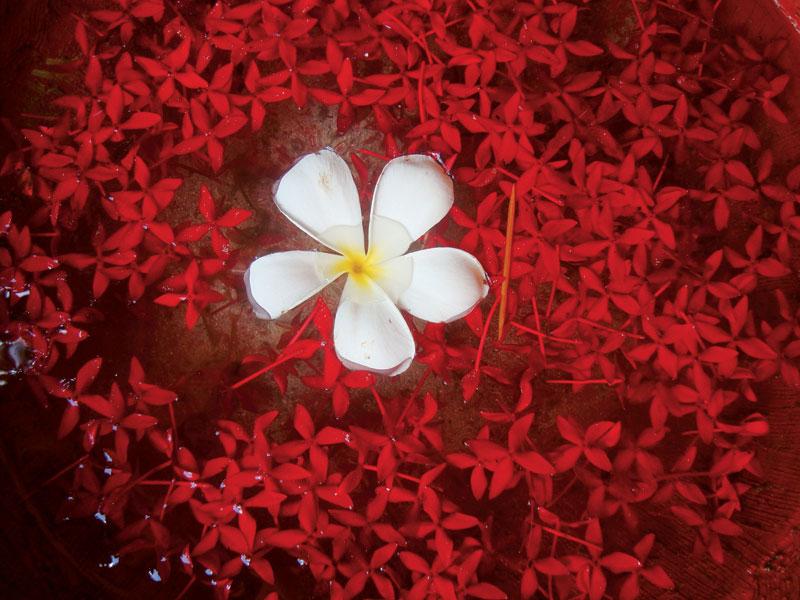 Flores espalhadas pelo resort