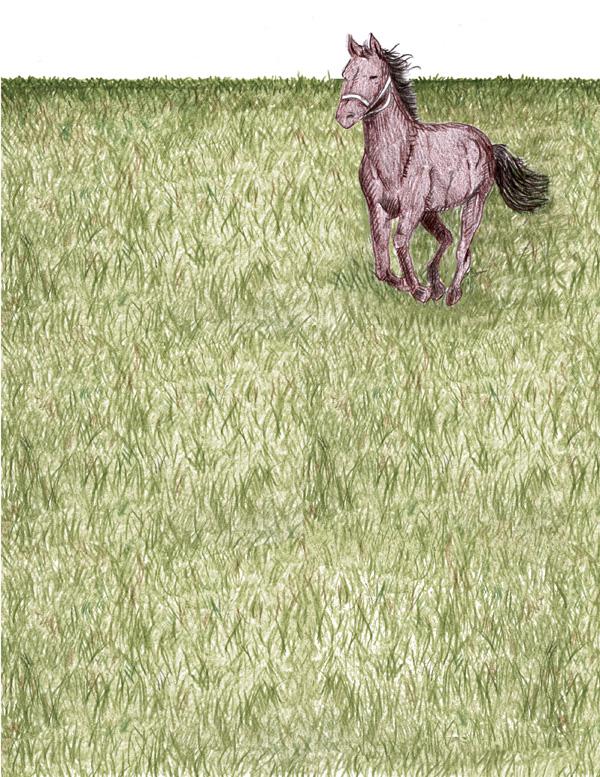 Sobre cavalos e amores