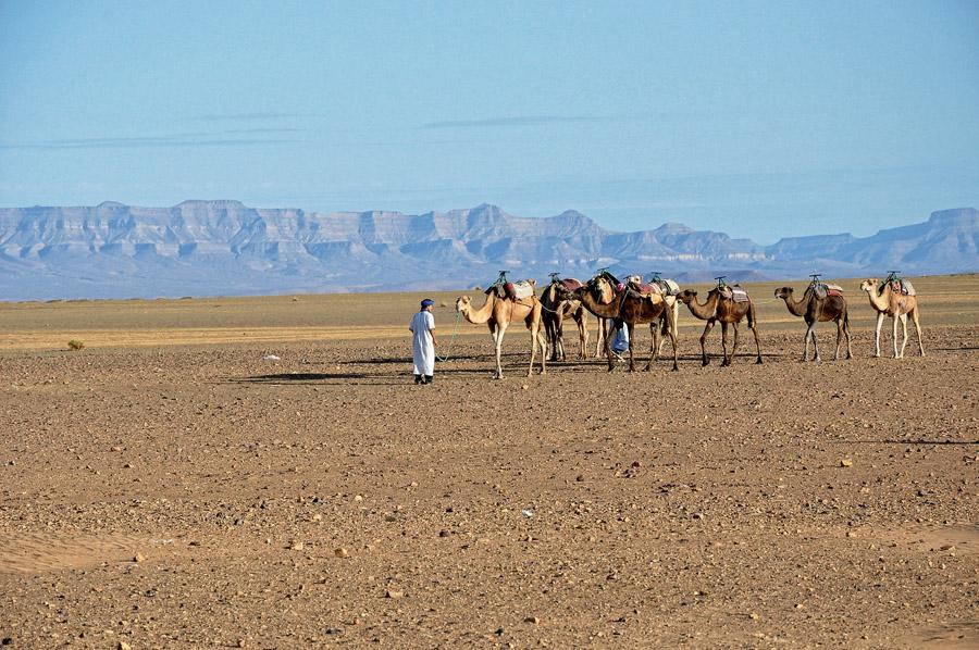 Os berberes e os camelos