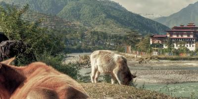 Butão contra o aquecimento global