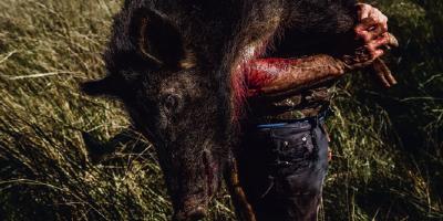 A caça de javalis no Brasil