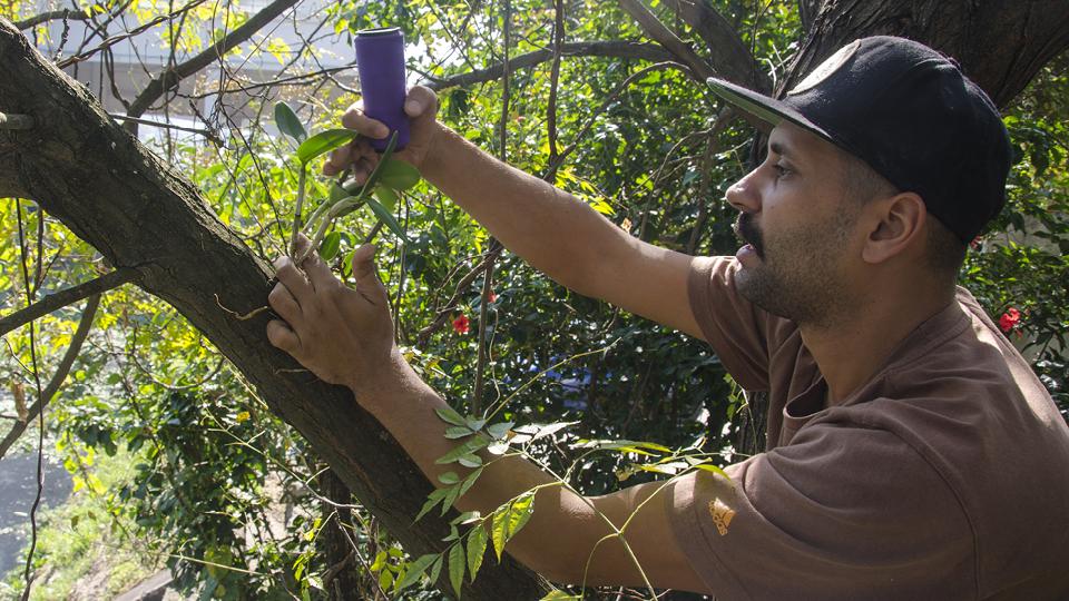 O orquidófilo Alessandro Marconi