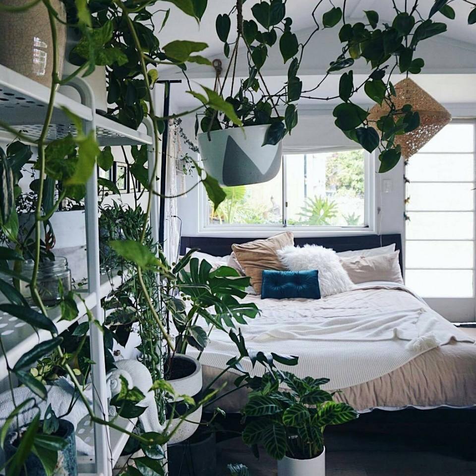 """""""Onde os sonhos são feitos de exuberantes selvas verdes e jardins secretos"""""""