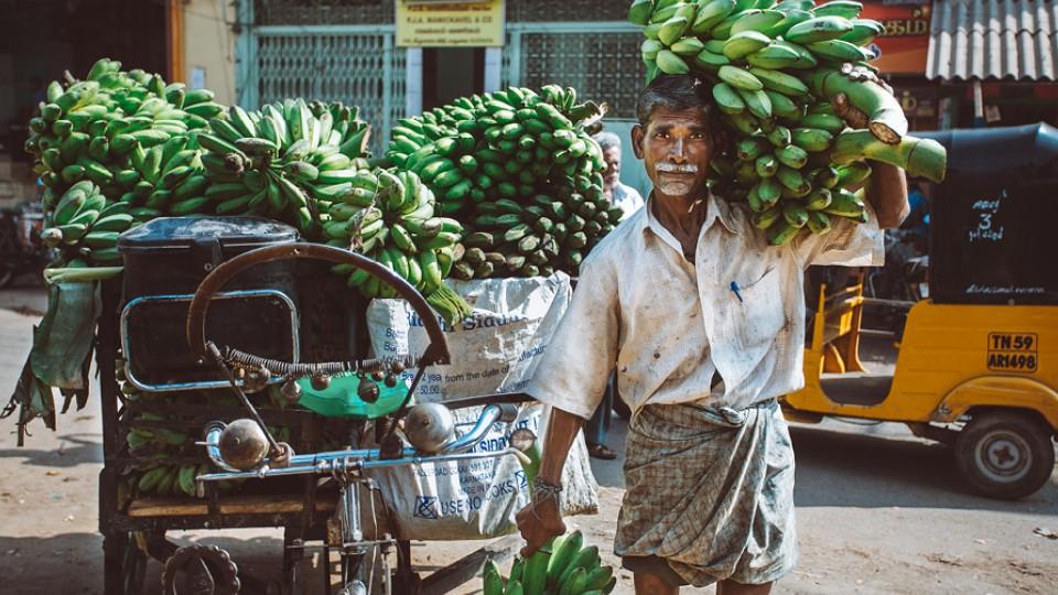 No sul da Índia a banana tem uma grande importância, na alimentação e na religião. É comum ver bananas oferecidas aos deuses em templos