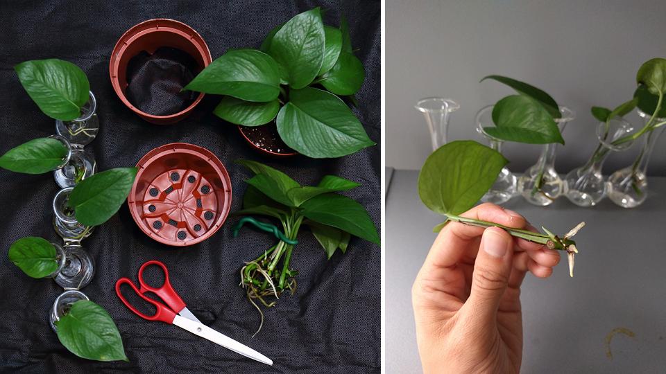 Imagens de alguns dos tutoriais criados por Darryl Cheng para o House Plant Journal
