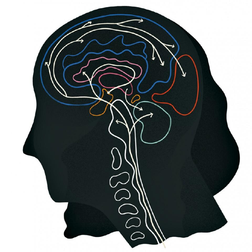 a distribuição da serotonina no cérebro, percorrendo o caminho desde onde é