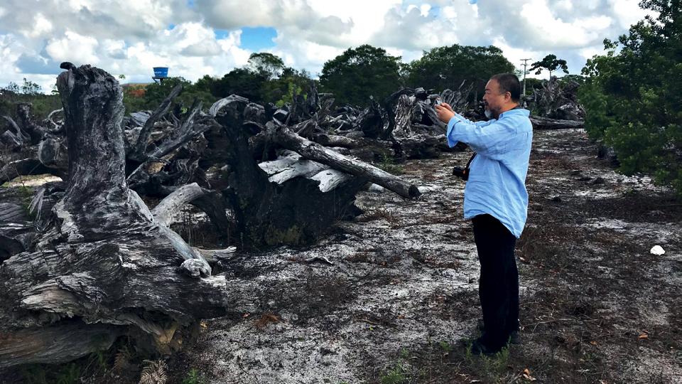As raízes descobertas em Trancoso foram trabalhadas pelo artista junto a carpinteiros chineses e brasileiros