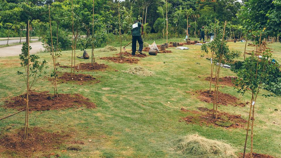 Além de sombra para quem passa, as novas árvores oferecerão também abrigo e comida para os que voam e mais saúde para todos.