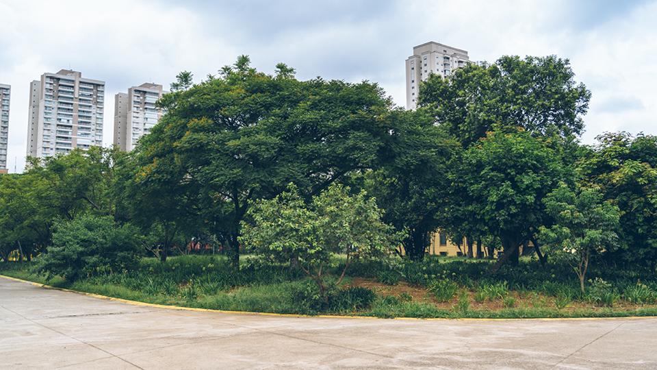 Vegetação nativa paulistana no Parque Belém