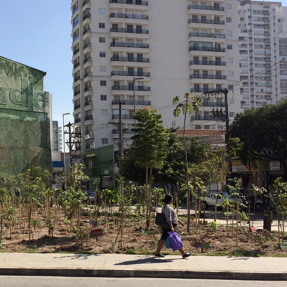 O antes e depois do Bosque da Batata, em Pinheiros. Cardim resgatou a Mata Atlântica original paulistana onde antes só havia concreto.