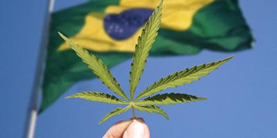 5 anos que mudaram a maconha medicinal no Brasil