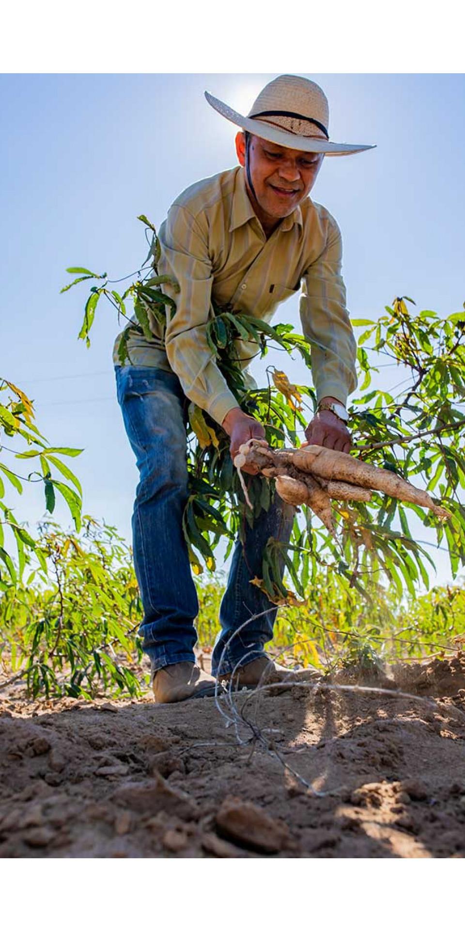 Lourival Líbano, 52 anos, no plantio de mandioca em Salitre, sul do Ceará