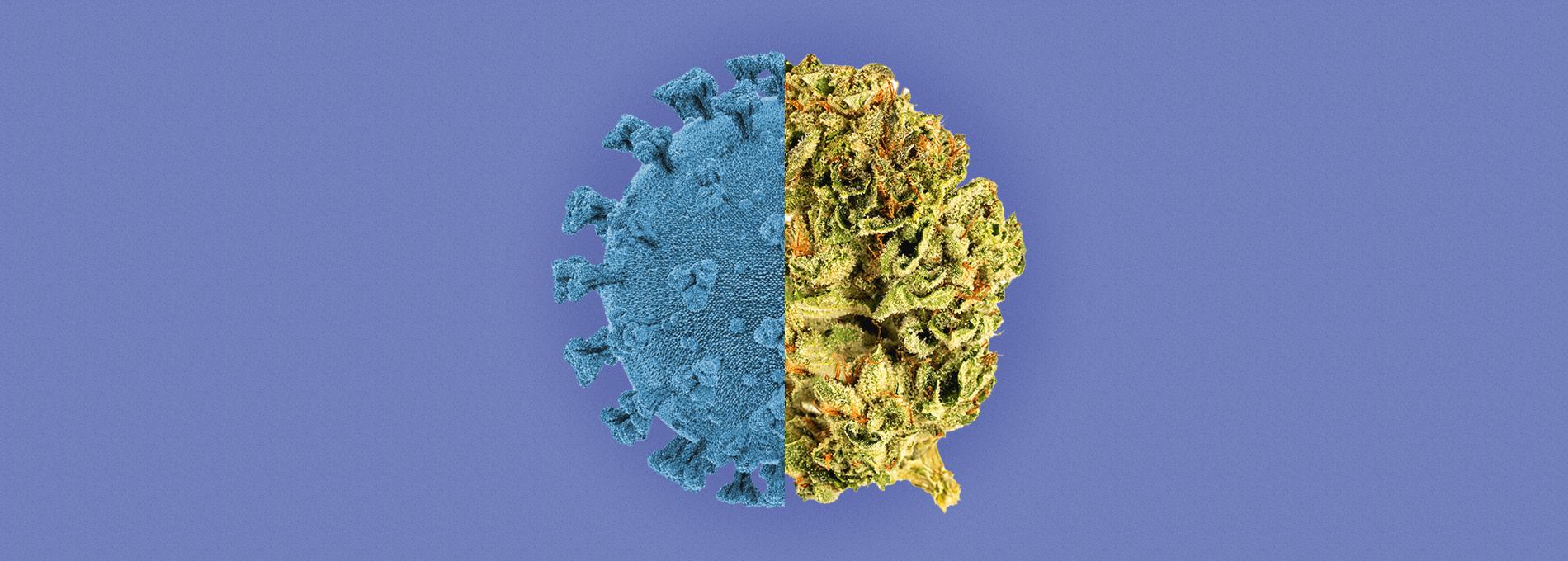 Cannabis e coronavírus: o que esperar dessa associação?