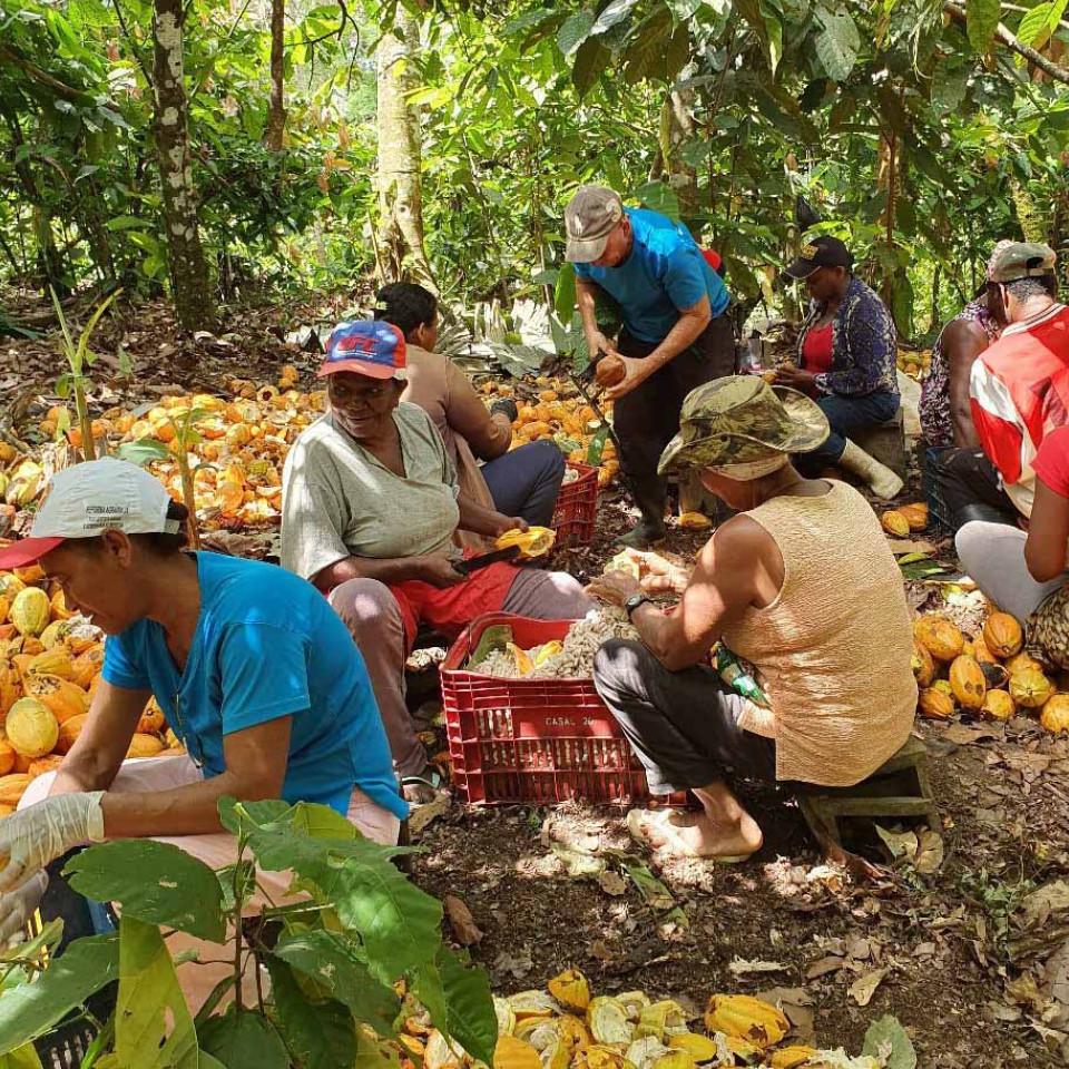 Produtores  de alimentos de pequeno porte - como este assentamento de cacau na Bahia - devem ganhar força durante a crise