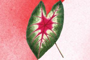 Ciclos desregulados: como está sua menstruação na pandemia?