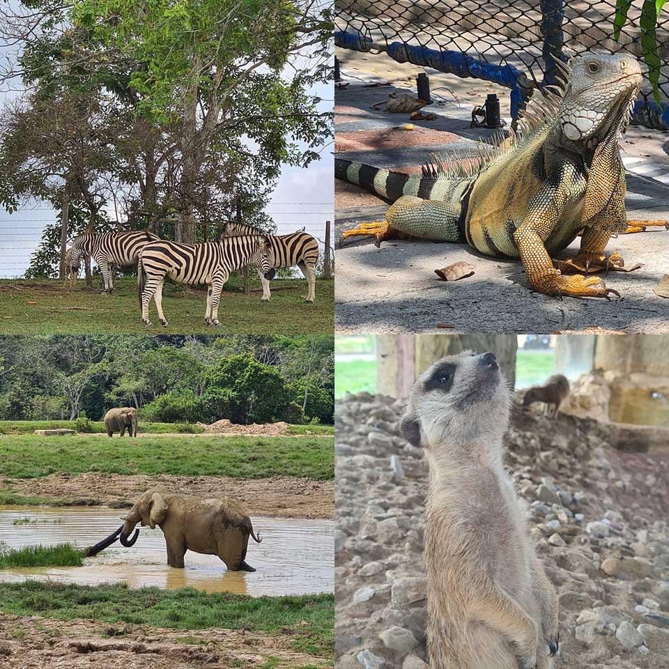 Na província de Puerto Triunfo, a pouco mais de 200km da capital colombiana, Pablo Escobar construiu um santuário particular para viver entre paisagens exóticas e centenas de espécies de animais