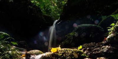 O renascimento do rio Pinheiros